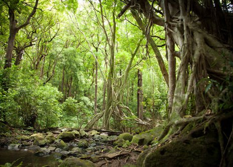 Deep-in-the-rainforest2