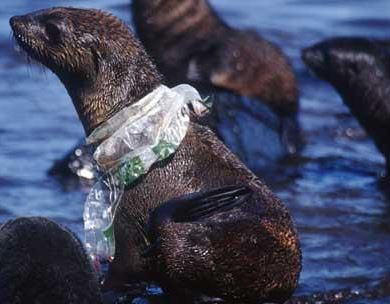 seal in plastic