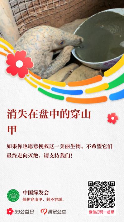 China trafficked pangolin