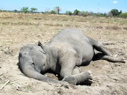 deadelephant
